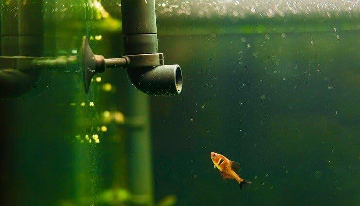 56 litros acuario