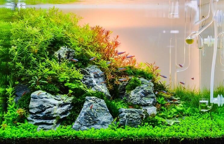 aquascaping paisaje acuatico