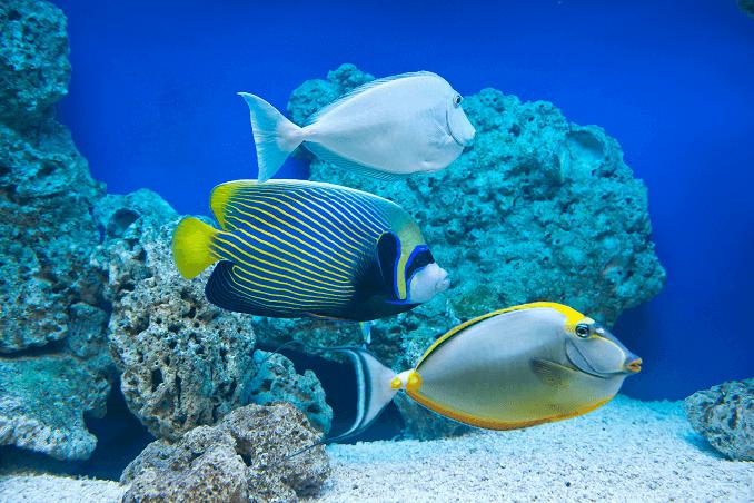 compatibilidad peces