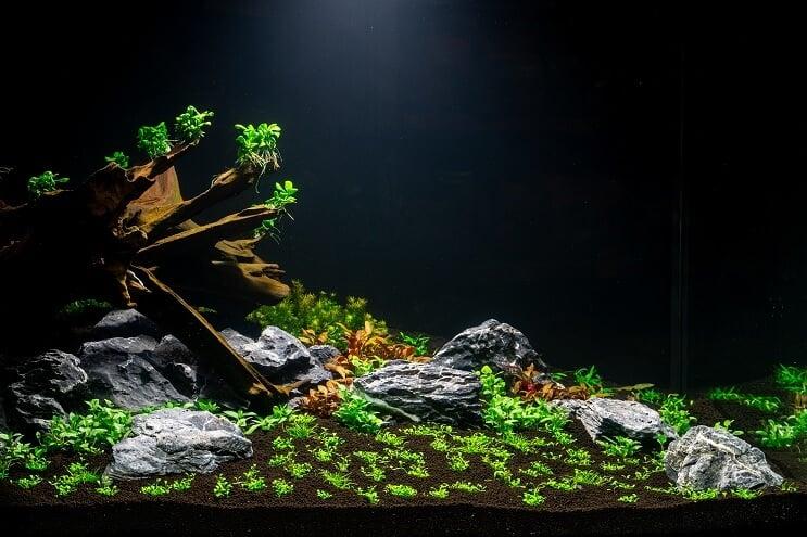 ideas de paisaje acuatico