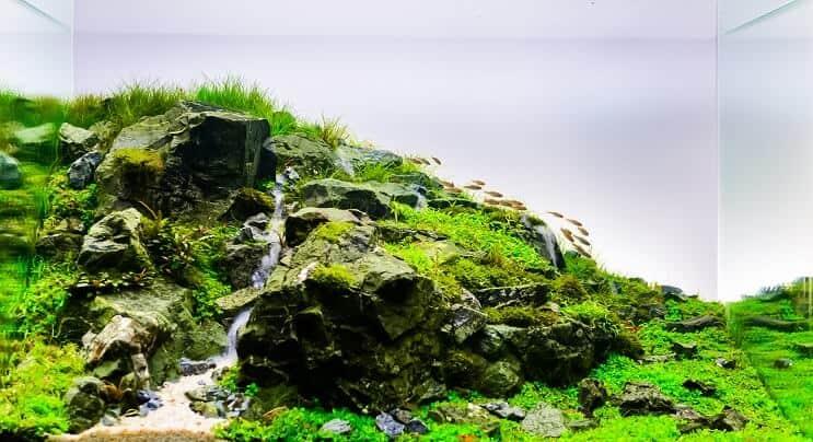paisaje acuatico natural