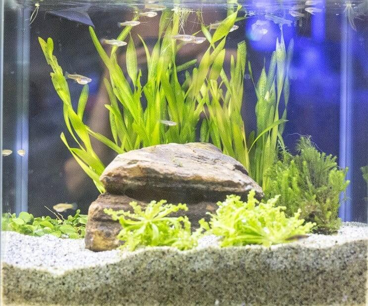 habitat y condiciones acuario