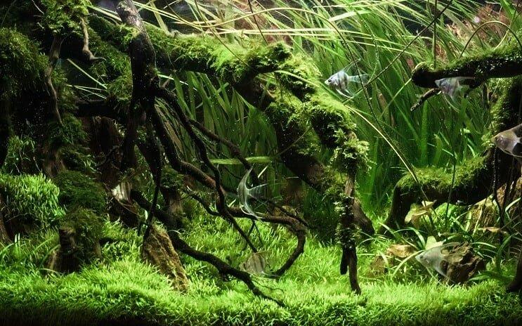instalar acuari plantado