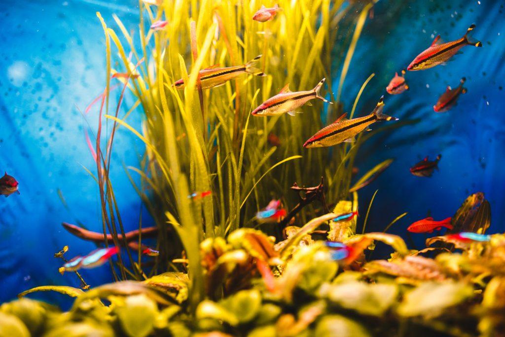 peces beneficiosos para salud