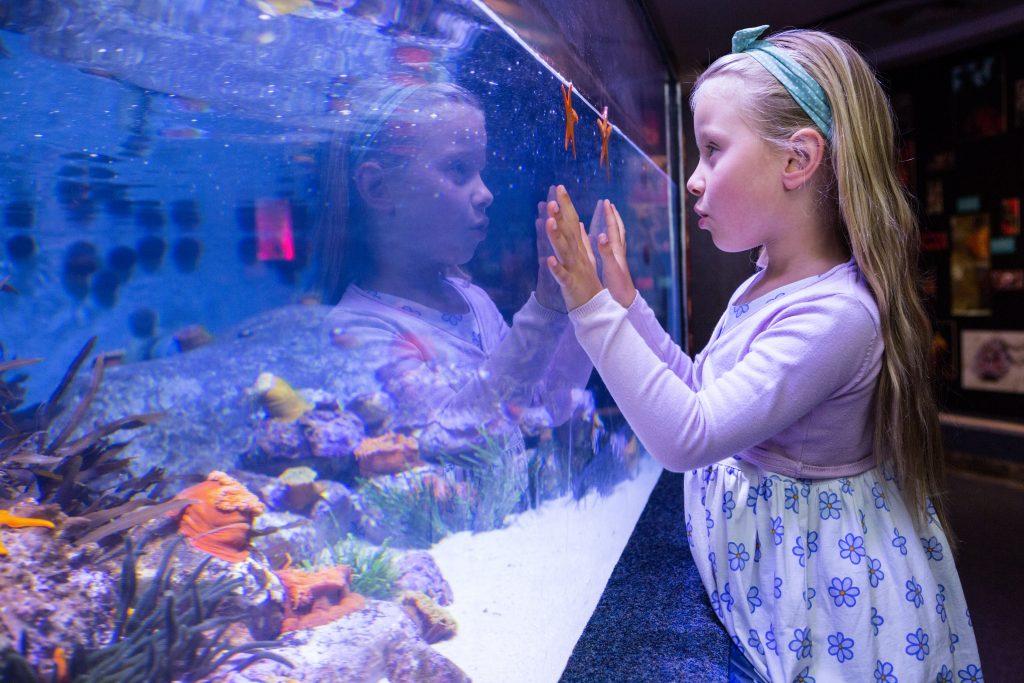 beneficios tener peces niños