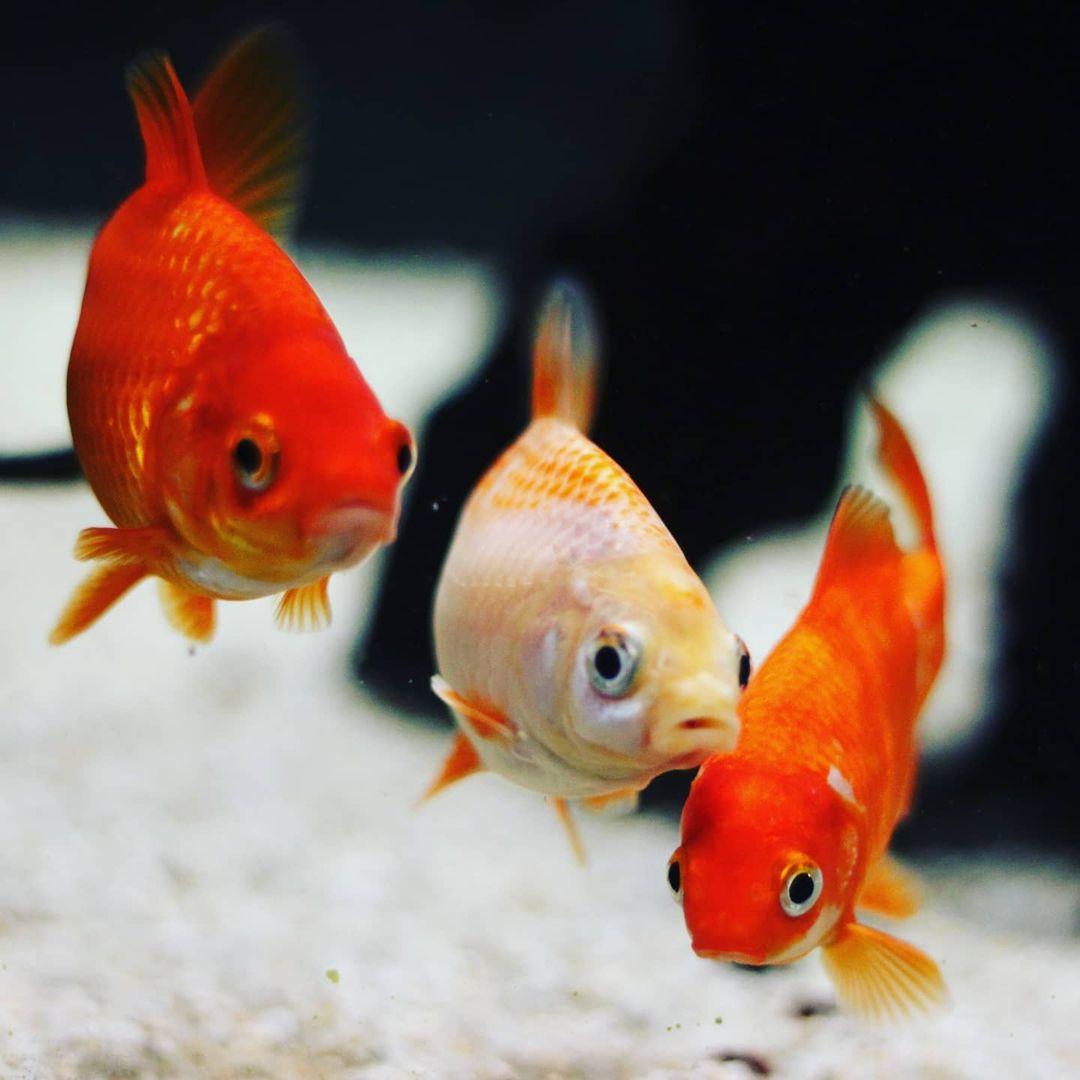 acuario mania